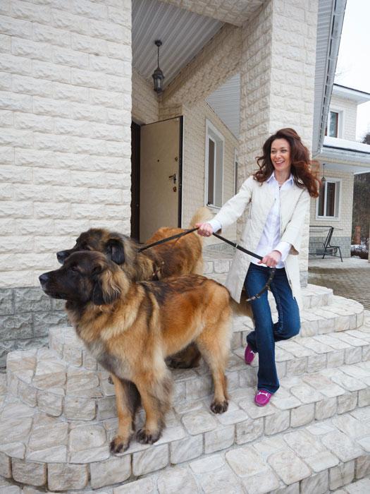 Таких собак (порода – леонбергер) в загородном доме Натальи Романовой семь