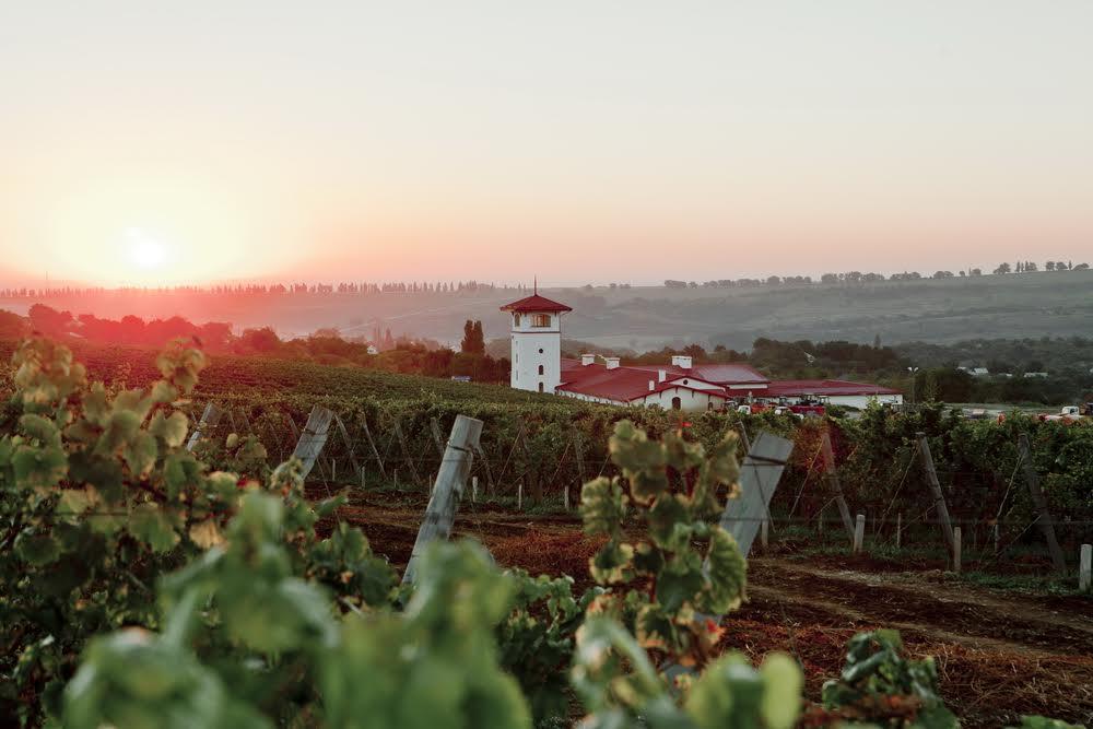 Виноградники винодельческого хозяйства «Лефкадия»