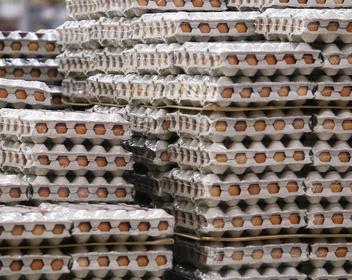 Яйца с рентабельностью в 60% и американские ковбои: каким стал агробизнес в России