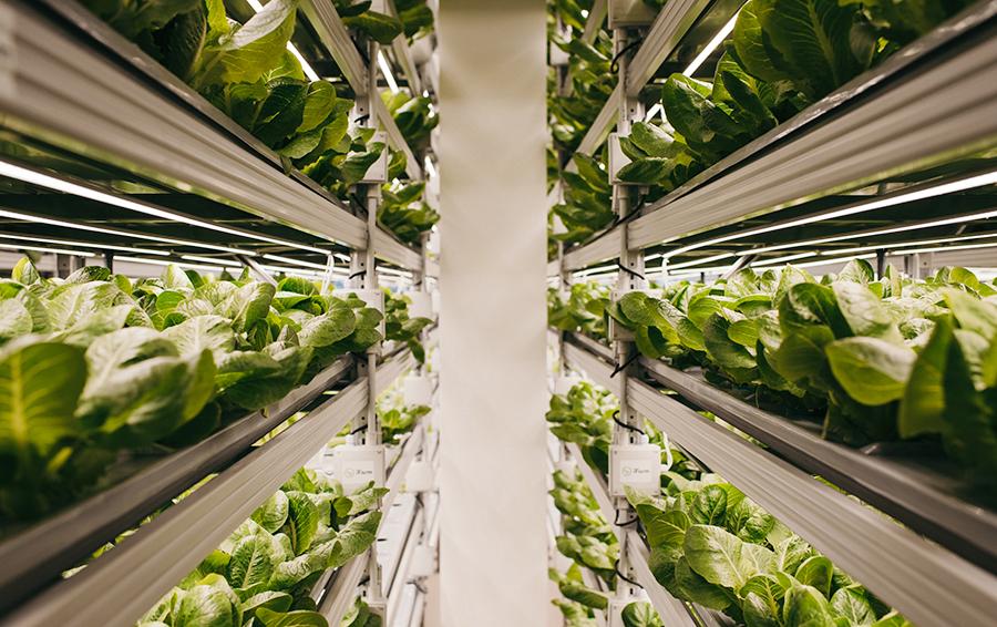Александр Лысковский задумался о выращивании свежих овощей и зелени, когда учился в кулинарной школе в Париже.