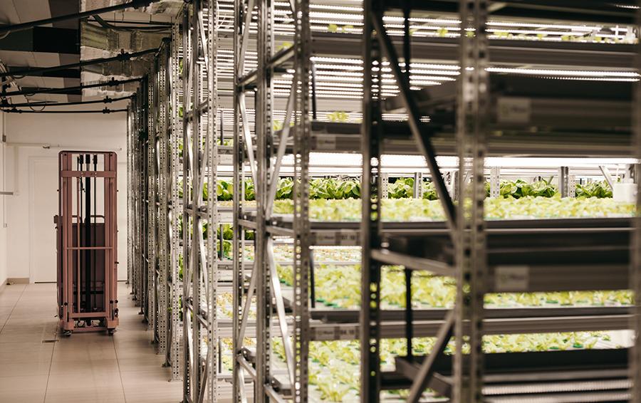 Решение iFram позволяет выращивать овощи и зелень на многоярусных конструкциях без участия человека