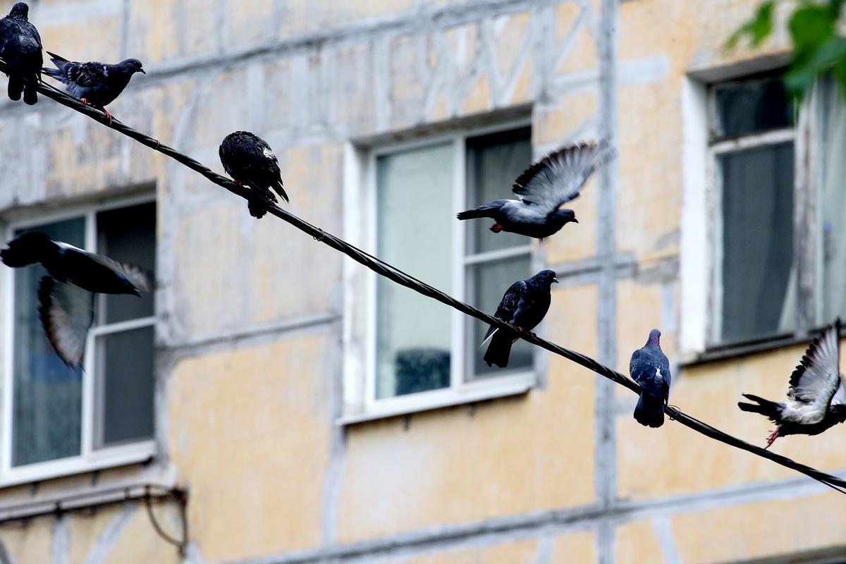 Типовая застройка: в чем минусы квартир в жилье под реновацию
