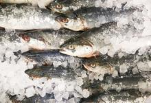 Ни рыбы, ни сыра. Путин продлил действие продуктового эмбарго до 2020 года