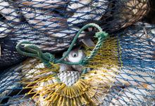 Покупатели требуют рыбы. Как побороть браконьеров рыночными методами