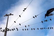Правительство отложило введение соцнормы на электричество