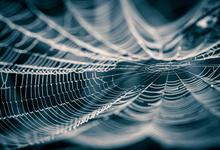 Мускулы роботов сделают из паутины
