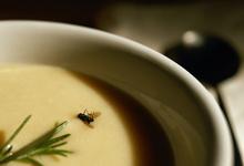 Муха в супе. Почему ваш клиент «не всегда прав»
