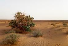 Одна вокруг света. Как почувствовать себя кинозвездой в Судане