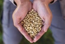 Бодрый гид: как начать разбираться в разных сортах кофе
