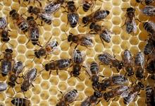 «Настоящий экотерроризм». Эксперт оценил ущерб от гибели пчел в сумму больше триллиона рублей