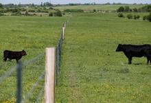«Мираторг» стал крупнейшим владельцем сельскохозяйственных земель в России