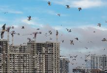 Квартиры из воздуха. Почему слова Путина о массовом строительстве жилья останутся утопией