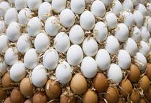 Генетически модифицированные яйца будут лечить людей
