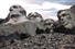 Статуи на горе Рашмор, Южная Дакота, США