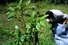 Плантации коки (Боливия)