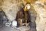 День черепов (9 ноября, Боливия)