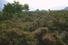 Денежный дуб (остров Мари, Шотландия)