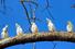 Национальный парк Какаду (Австралия)