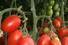 Земли для сельского хозяйства