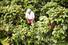 Кофейные плантации (Колумбия)