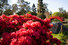 Jardín Japonés (Буэнос-Айрес, Аргентина)
