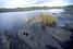 Пич-Лейк: асфальтовое озеро