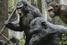 «Планета обезьян: Революция», режиссер Метт Ривз, США