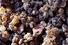 Натуральная жвачка из ладана (от 70 рублей за 100 грамм)
