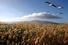 Заповедник на острове Капити (Новая Зеландия)