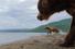 Медведь. Камчатка