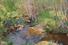 Константин Коровин, «Лесной ручей»