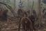 На фото: октябрь 2015 года. Орангутаны в центре спасения обезьян в Индонезии. Премьер-министр Индонезии Наджиб Разак призвал прекратить сжигать леса и выживать оттуда обезьян, чтобы охотиться на них.