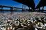 На фото: февраль 2015 года. Более 21 т мертвой рыбы всплыли на поверхность озера Родриго-де-Фрейтас в Рио-де-Жанейро. По заявлениях экологов, это произошло из-за сильных дождей, которые подняли уровень воды, что повлекло за собой резкое падение температу