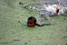 На фото: май 2009 года. Мальчик плавает в реке Буриганга в Дакке (Бангладеш). Буриганга — одна из самых загрязненных рек планеты. Воду из нее нельзя пить, а также употреблять для мытья и технических целей. Несмотря на запрет на сброс отходов в реки, в Бу