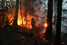 Пожар рядом с деревней Ковригино (Московская область)