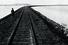 Закаспийскую железную дорогу строили поэтапно с 1881 года, в 1885-м пути пришли в Ашхабад, в 1888 году — вСамарканд, в 1891-м по ней вывезли 165 000 т хлопка