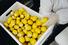 Дальше следует заготовительный цех. Женщины в белых халатах и перчатках режут лимоны, чистят грейпфруты и апельсины.