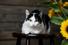 Дефицитные собаки, виртуальные коты