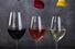 Дегустация вин и тосты в Rombus