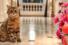 Коты Фа-раон, Клеопатра, Лилибет, отели Oetker Collection
