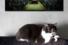 Кошка Ума, галерея Fragment