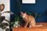 Коты клиентов, «Сделано»