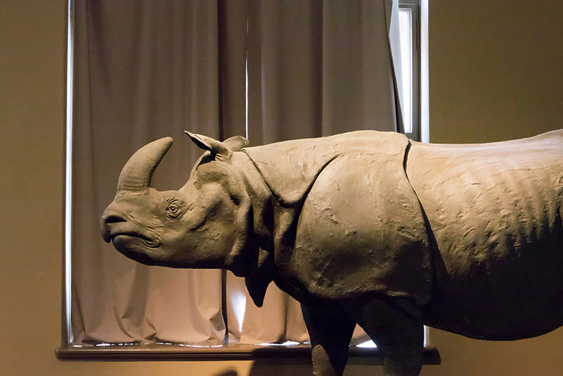 Чучело черного носорога, 1963