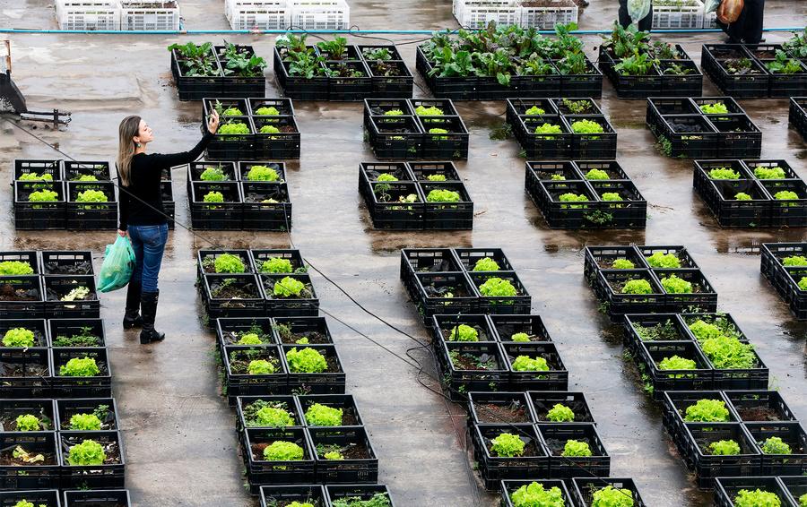 Под органической теперь понимается экологически чистая сельскохозяйственная продукция, сырье и продовольствие, производство которых соответствует ряду требований.