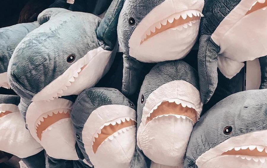 Фото: дайверы в компании большой белой акулы - BBC News Русская служба   566x900