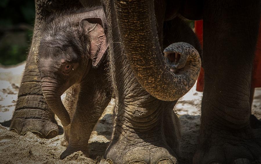 Конкурировать со  «слонами» рынка новорожденным стартапам чаще всего оказывается не под силу