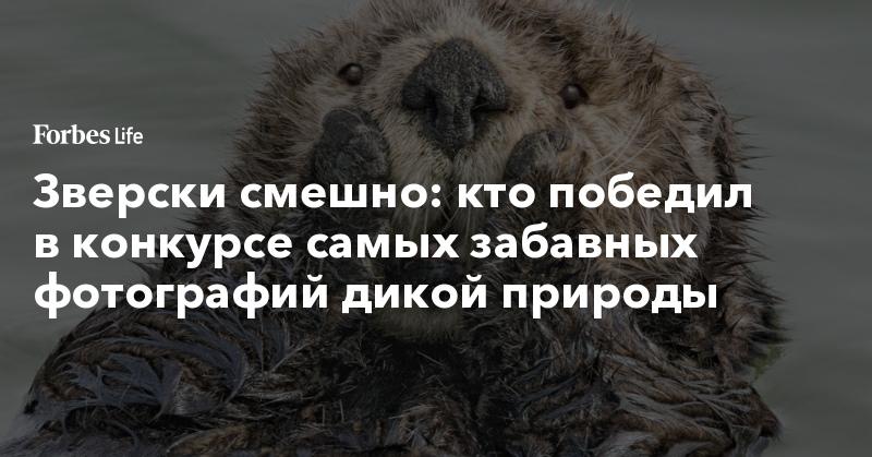 Зверски смешно: кто победил в конкурсе самых забавных фотографий дикой природы