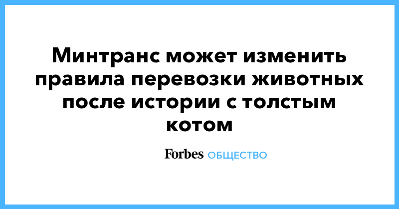 Минтранс может изменить правила перевозки животных после истории с толстым котом   Общество   Forbes.ru