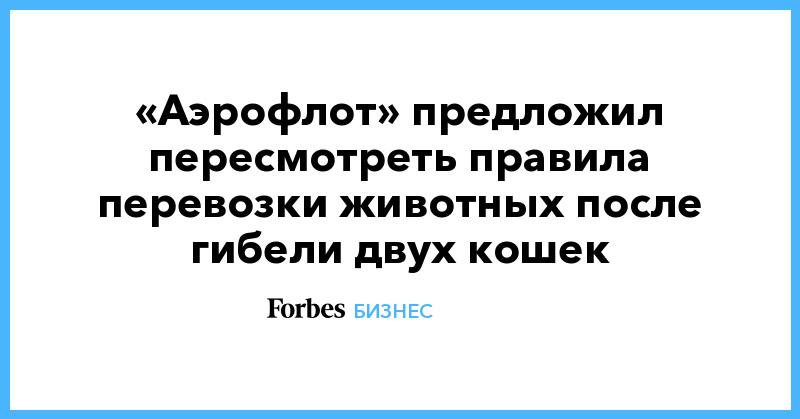 «Аэрофлот» предложил пересмотреть правила перевозки животных после гибели двух кошек | Бизнес | Forbes.ru